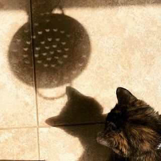 Real Cat Paisley observes the Great American Eclipse 2017