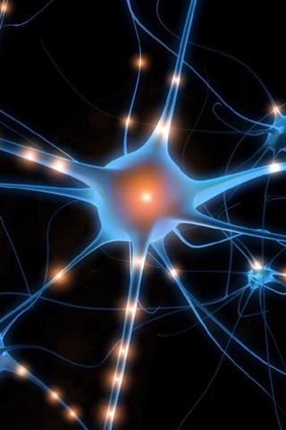 HUMAN BODY FISIOLOGY: LA NEURONA