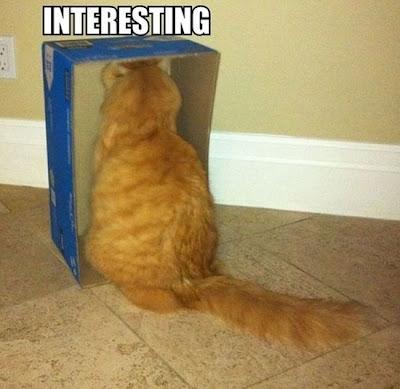 Cat Box Interesting Funny Photo Image