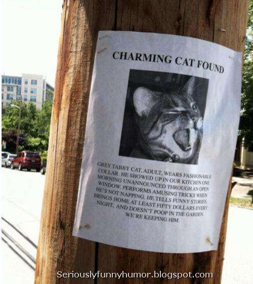CHARMING CAT FOUND LOL