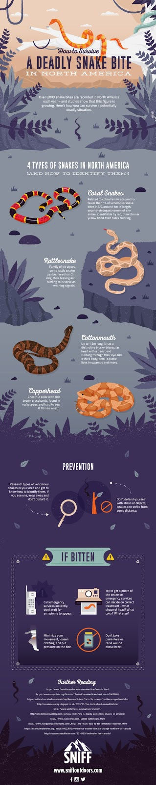 Snake Types Bite Prevention And Treatment