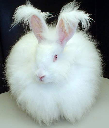 Sweet Fluffy: Cute Easter Bunny Rabbit Pictures