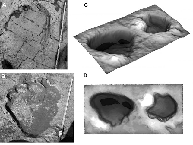 Scientists make tracks on dinosaur claw function