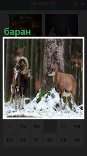 два барана зимой около дерева стоят