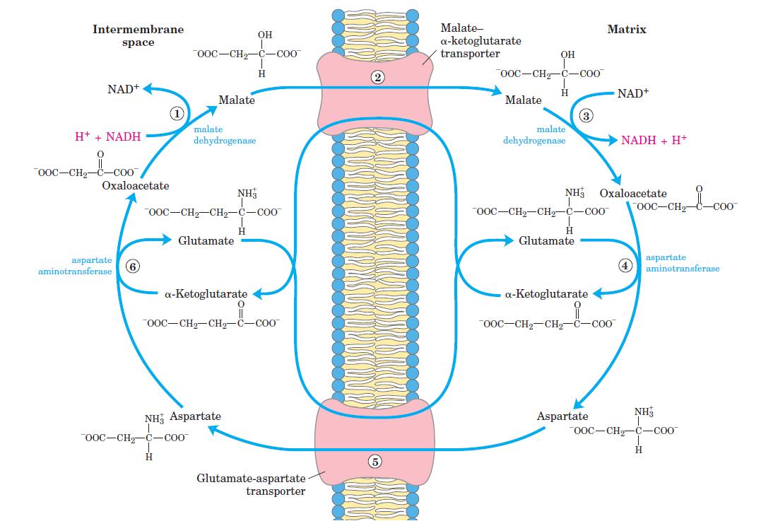 Lanzaderas Bioquimica Pdf