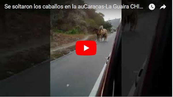 Se soltaron los caballos en la autopista Caracas-La Guaira