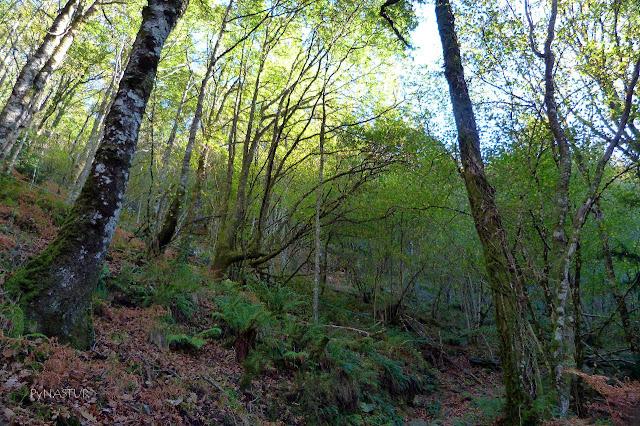 Bosque del Silencio - Villanueva de Oscos - Asturias