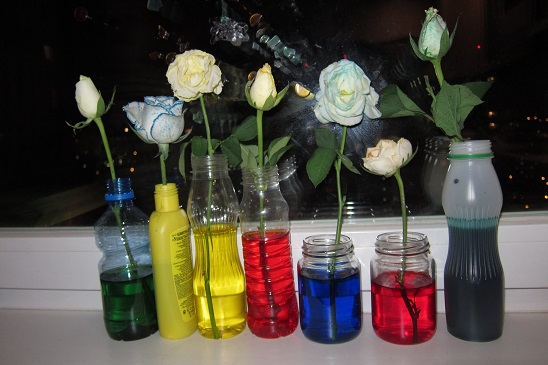 цветы, цветы живые, природные материалы, окрашивание, окрашивание цветов, окрашивание живых цветов, цветы для букета, цветы в подарок, оформление цветов, цветы на 8 марта, цветы на День Влюбленных, цветы необычные, изменение цвета, красители, подарок на день святого Валентина, подарки на день всех влюбленных своими руками, подарок к дню святого Валентина своими руками, день всех влюбленных подарки, подарок на день святого Валентина парню своими руками, что подарить на день влюбленных мужу, подарки на 14 февраля, подарки на день святого Валентина, любовные подарки, подарки для влюбленных, подарок на день святого Валентина девушке своими руками подарок на день святого Валентина мужу своими руками подарок на день святого Валентина жене своими руками подарок на день святого Валентина мужчине своими руками подарок на день святого Валентина женщине своими руками подарок на день святого Валентина любимой своими руками подарок на день святого Валентина любимому своими руками Романтические подарки на день влюбленных, Полезные подарки на день влюбленных, ОригинальныеС учетом хобби любимого С учетом хобби любимого подарки на день влюбленных, подарки на 14 февраля для любимого сделать своими руками, подарки на 14 февраля для любимой сделать своими руками, подарок парню на 14 февраля идеи своими руками как сделать подарок на день святого Валентина своими руками подарки на день всех влюбленных своими руками подарки на 14 февраля своими руками оригинальные подарки на 14 февраля, интерьерный декор на 14 февраля, идеи для украшения дома на 14 февраля, идеи для украшения дома на День Влюбленных, St. Valentine's Day, День Святого Валентина идеи для оформления дома на день влюбленных, интерьерный декор на день смятого Валентина, валентинов день, День любви, День влюбленных,http://handmade.parafraz.space/