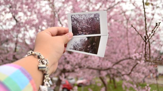Wallpaper: Collage with Sakura flowers