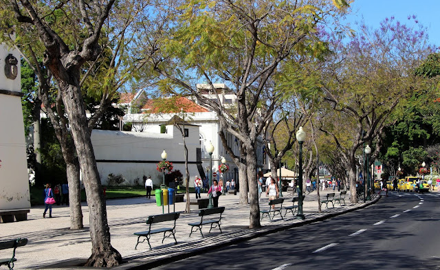 an avenue with charm