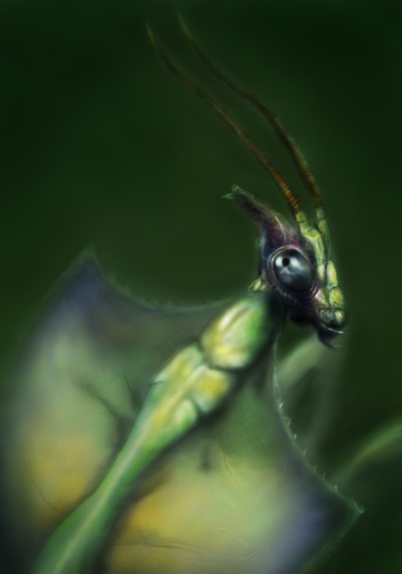 [Image: Mantis-3d_JPEG_SML.jpg]