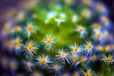 Ảnh đẹp các loài hoa, hình đẹp các loài hoa,