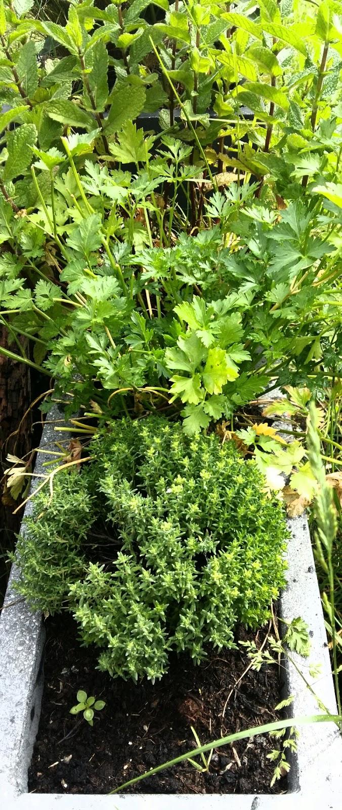 Plantes Aromatiques En Jardinière créer vos produits naturels : simple et pas cher !: 7 idées