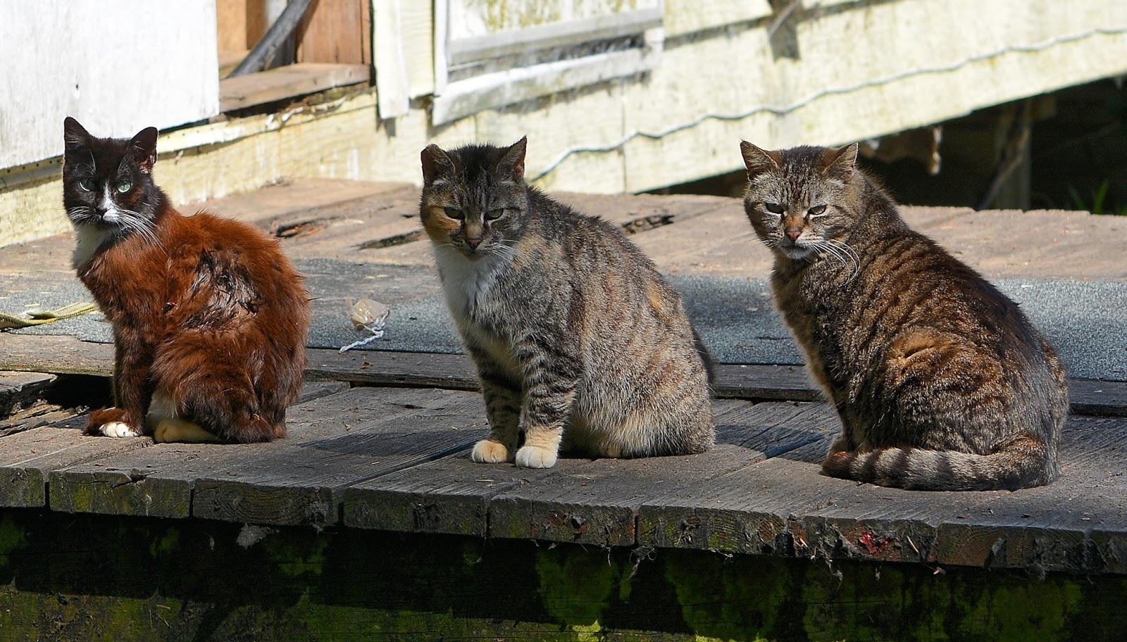 Three feral cats the feral life cat blog The three cats