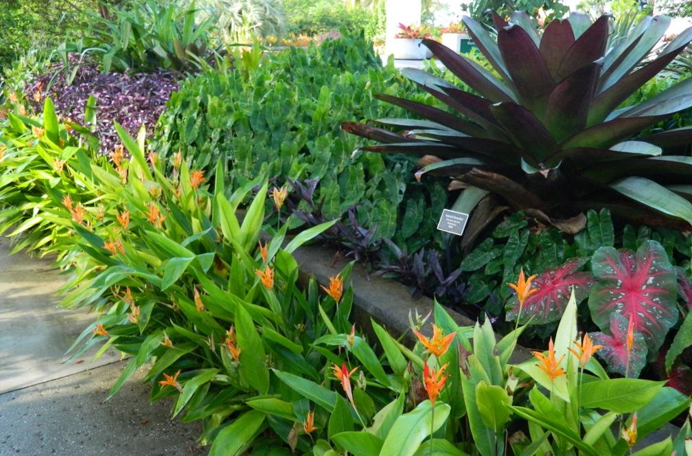1000+ images about Florida Garden on Pinterest   Kangaroo ...