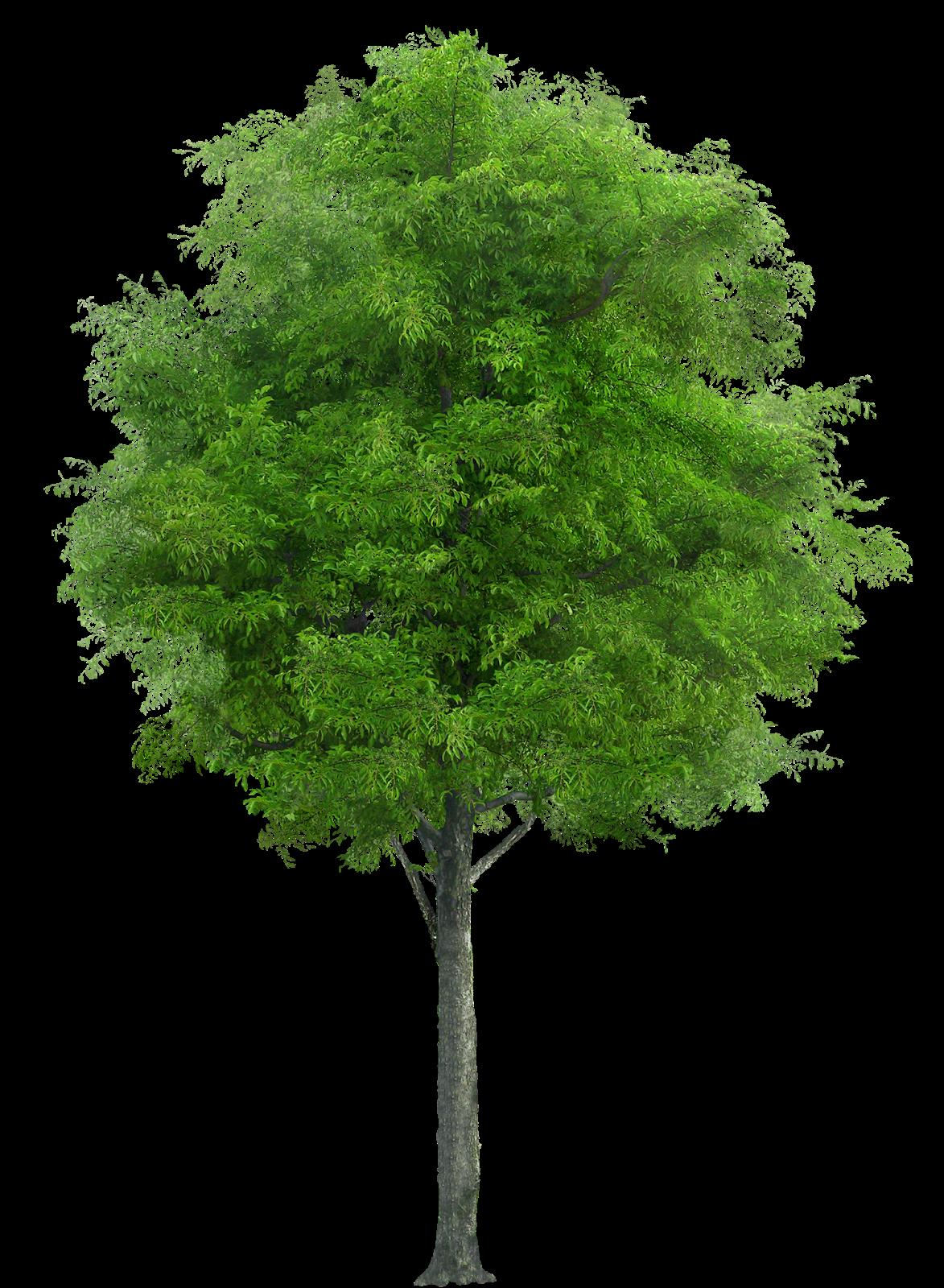 Mis diseños PSP: Tubes árboles