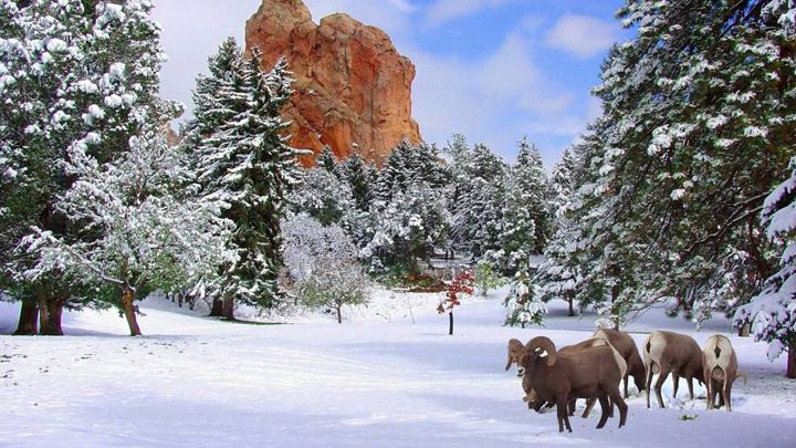 Colorado Springs in Winter