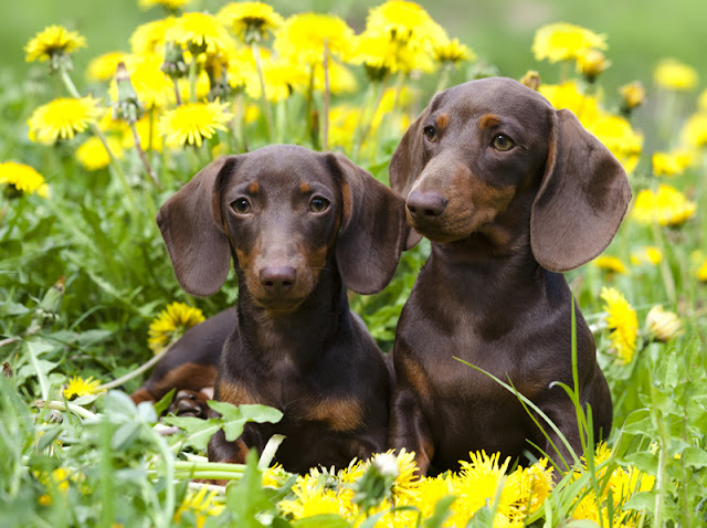 How to choose the right puppy in four easy steps (#wheresmum)