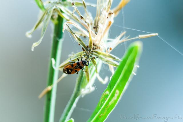 Fotografía macro de un insecto con vegetacion