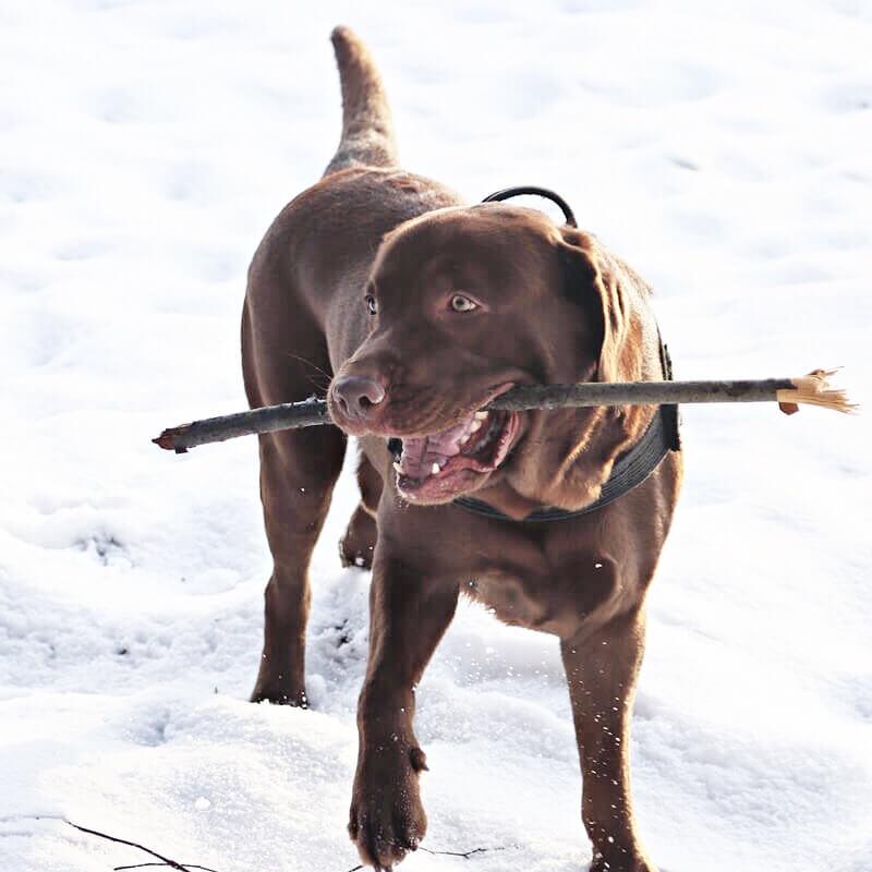 pies z patykiem w pysku