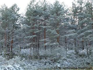 blog educación, nieve con niños