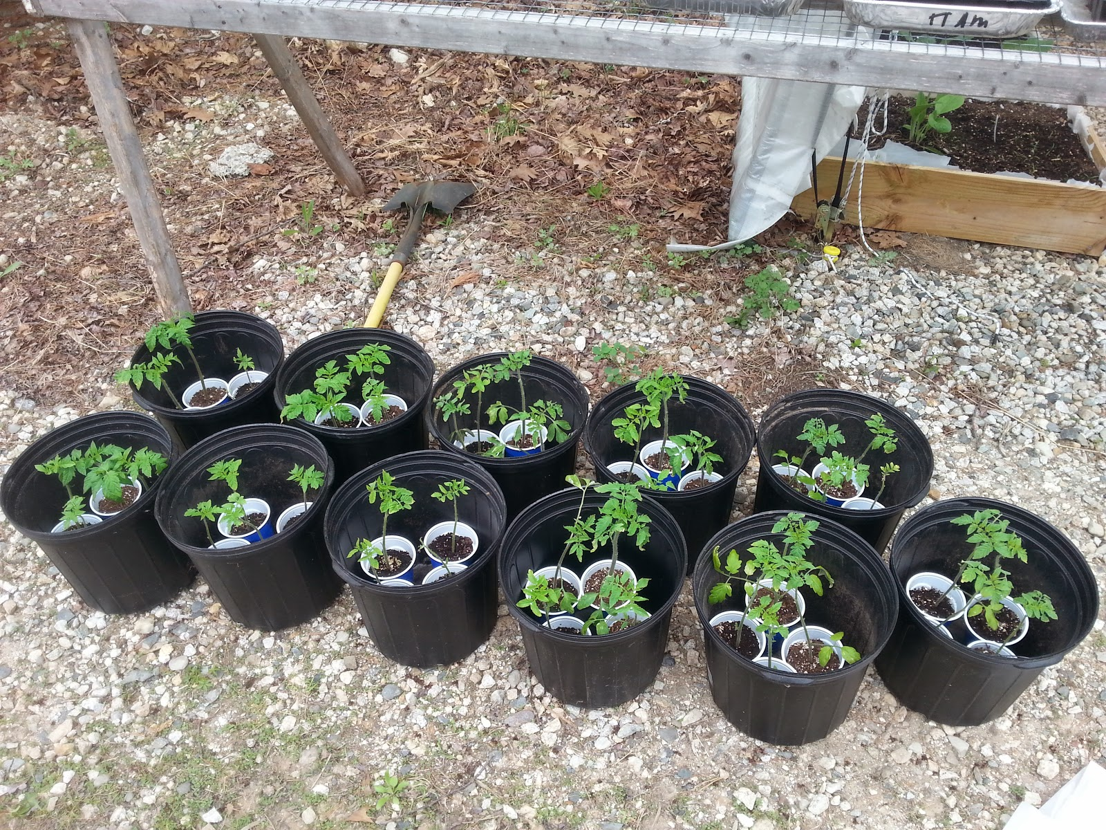 Modern homesteading maine ah style how grows it for Fish emulsion home depot
