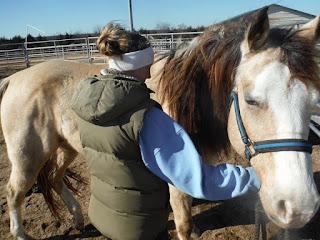 exercise plan for PSSM horse, rehab plan for PSSM horse, bodywork for PSSM horse