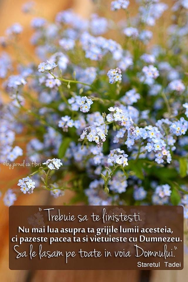 staretul Tadei grijile vietii pace liniste Dumnezeu flori de nu ma uita