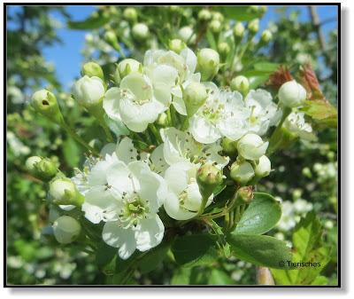 die schönsten Blüten im Frühling