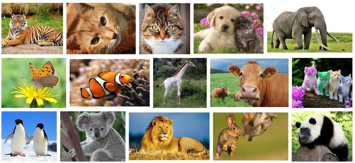 7100 Koleksi Gambar Hewan Beserta Namanya Dalam Bahasa Inggris HD Terbaru