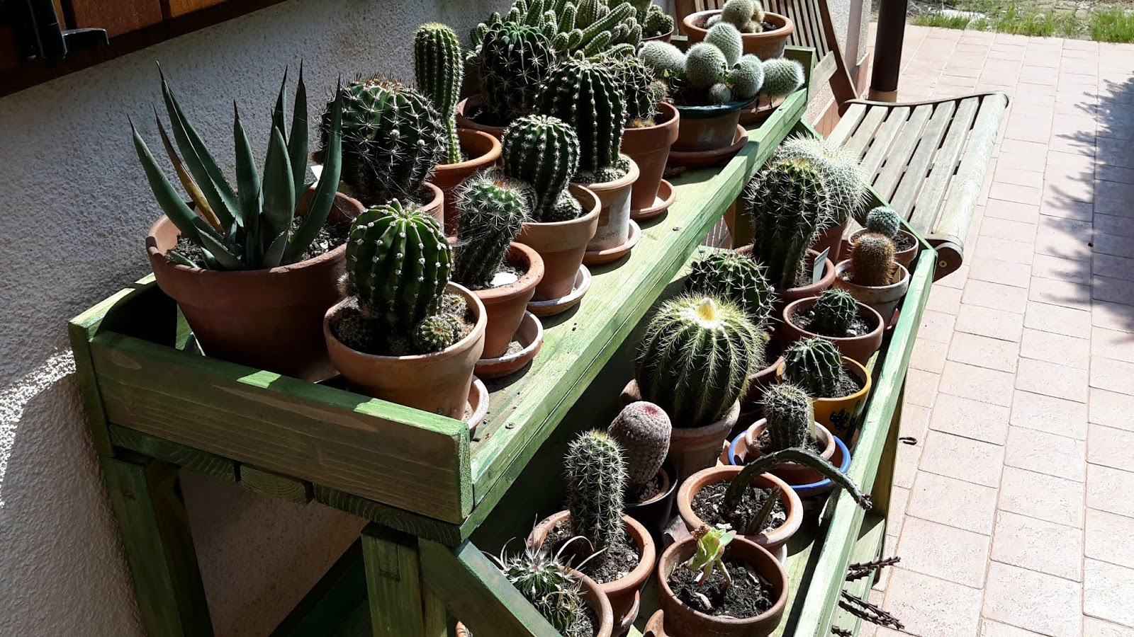 Come Seccare Le Piante collezionare piante.