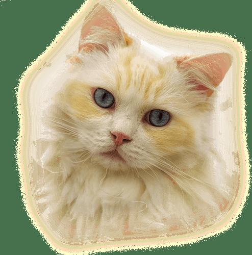 Gatos y perros png pets mascotas scrap for Red transparente para gatos