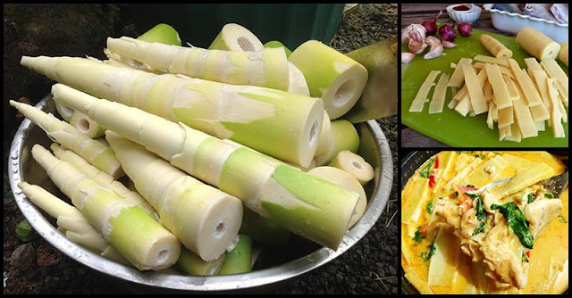 Reasons Why Bamboo Shoots Are Good For Our Health