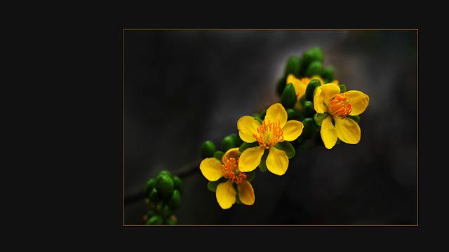 Bộ sưu tập hình nền hoa cúc cực đẹp