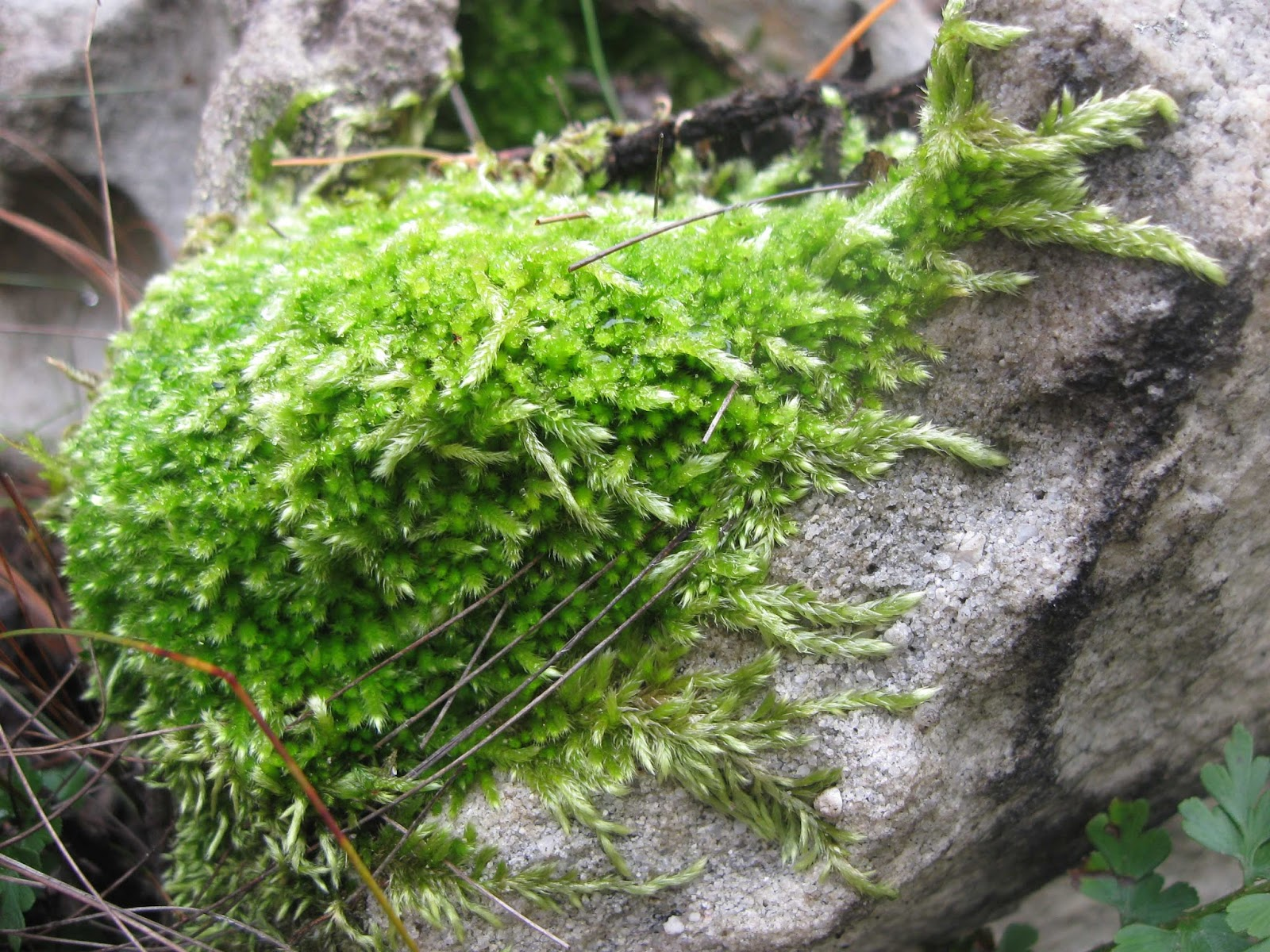 Learning About Biodiversity Bryophyte Life Cycle