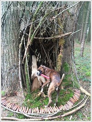 Boxer Amy in der Baumhöle im Wald