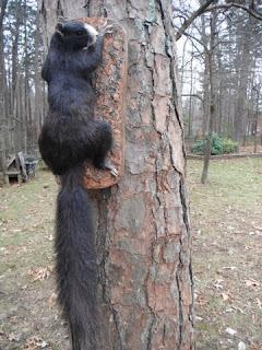 N.c. Squirrel Season North Carolina River F...