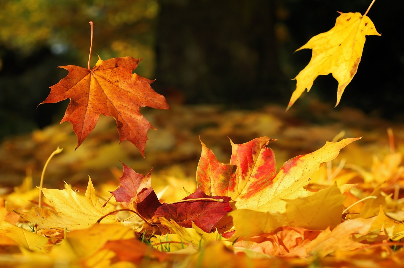Hypnogoria: FOLKLORE ON FRIDAY - Autumn Leaves