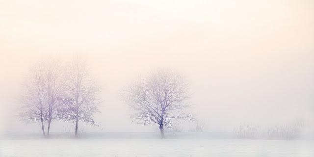 Neblige Winterlandschaft mit Schnee und kahlen Bäumen.