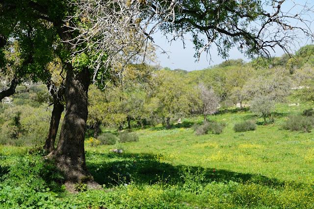 אביב בשמורת אלוני אבא