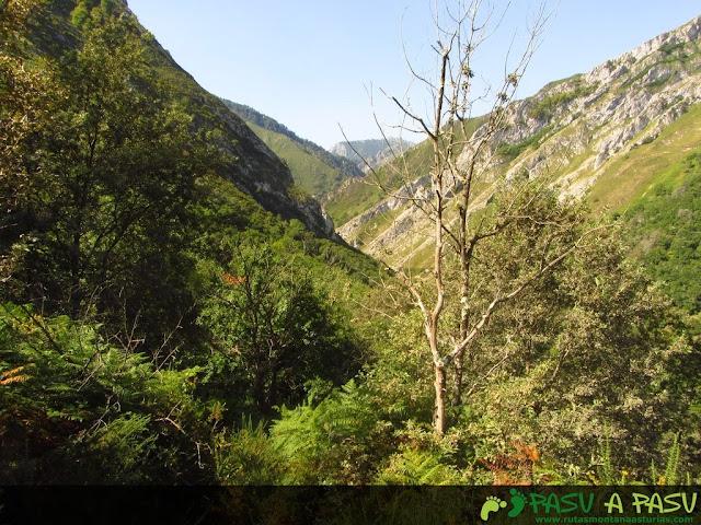 Tramo con vegetación y fondo Vallemoru