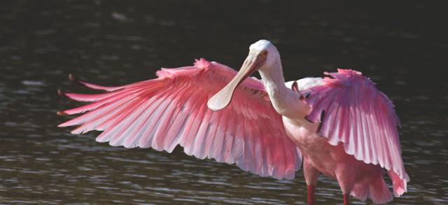 https://travellindia24.blogspot.com/2019/02/thol-bird-sanctuary.html