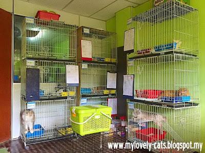 cat room 3