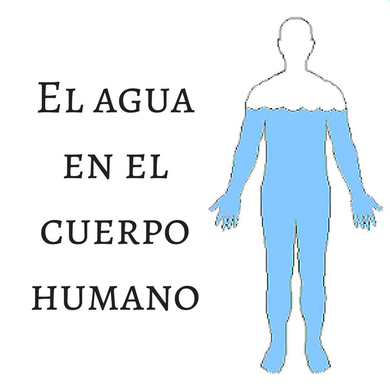 Distribuciones de la Calle: El agua en el cuerpo humano