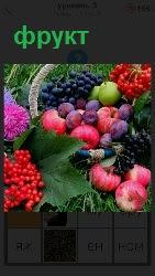 в корзинке лежат разнообразные фрукты