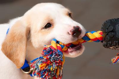 Six ways to entertain your dog indoors