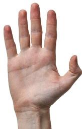 Foto de la mano humana, sentido del tacto
