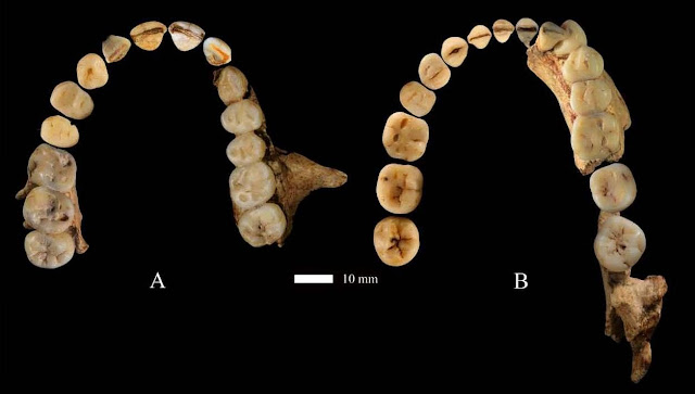 Dushan 1 skeleton offers new perspectives on the settlement of Homo sapiens in China