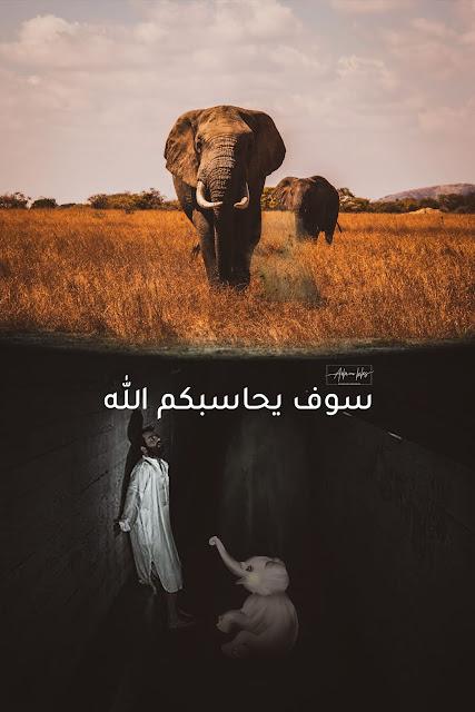قصة وفاة انثى الفيل في الهند