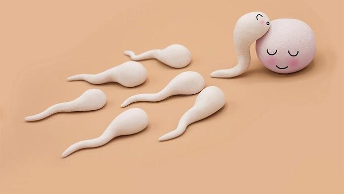 """Partenogénesis, """"nacimiento virginal"""" ¿Es posible dar a luz siendo virgen?"""""""